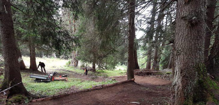 Leysin-Bike-Park-poteaux-woods